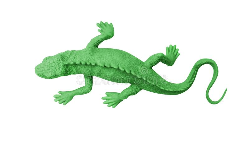 Top view green rubber gecko isolated on white background with clipping path royalty free stock images