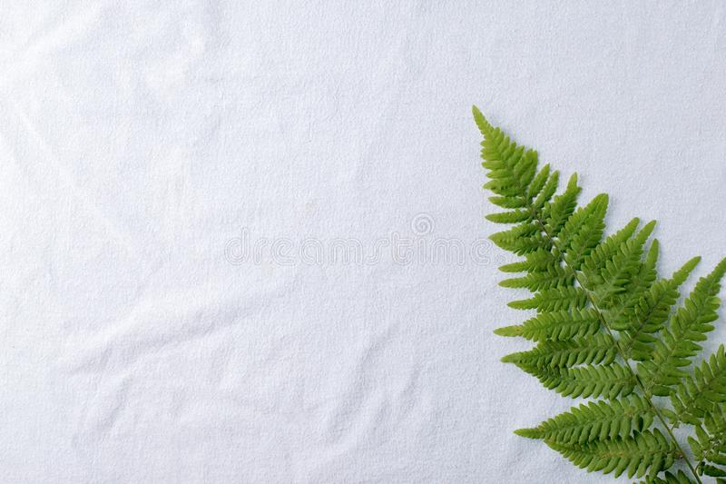 Top view of green tropical fern leaves on natural cotton blue tissue background. Flat lay. Minimal summer concept with fern leaf. royalty free stock photos