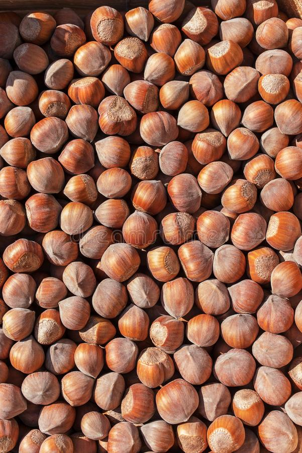 Top view of hazelnut royalty free stock images