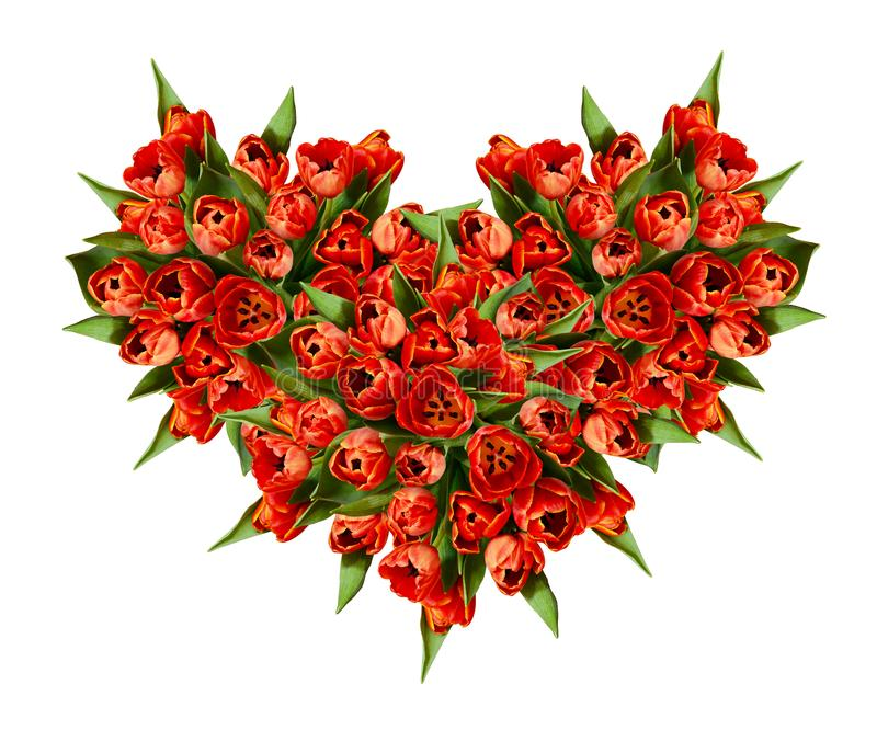 Top view on heart shape bouquet of red tulip flowers royalty free stock photography
