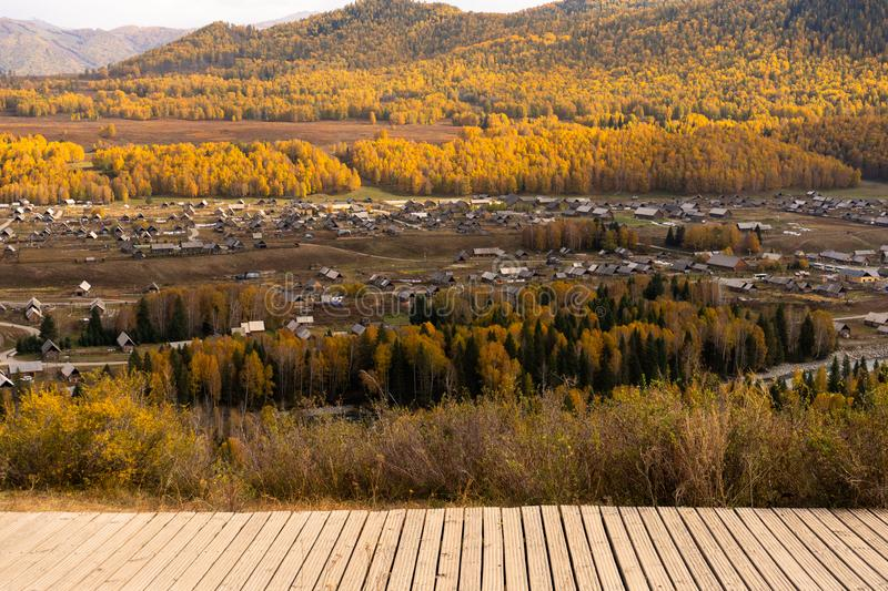 Top view of Hemu village in colorful autumn, nature popular landscape of China. Copy space xinjiang natural tree wood leaf yellow vibrant saturation walk path royalty free stock image