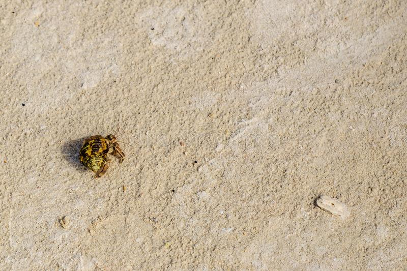 Top view of hermit crab on the beach. stock photo