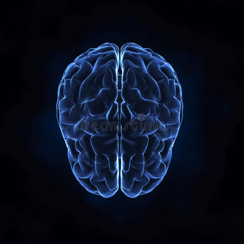Top view of human brain stock images