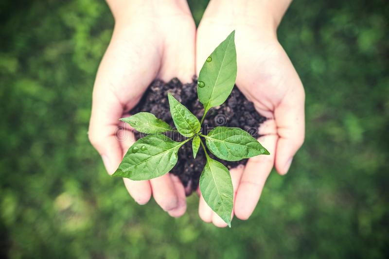 Top view image of hands holding soil and small tree to glow stock photos