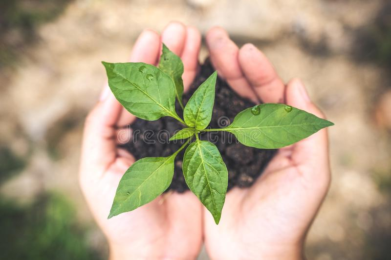 Top view image of hands holding soil and small tree to grow stock photos