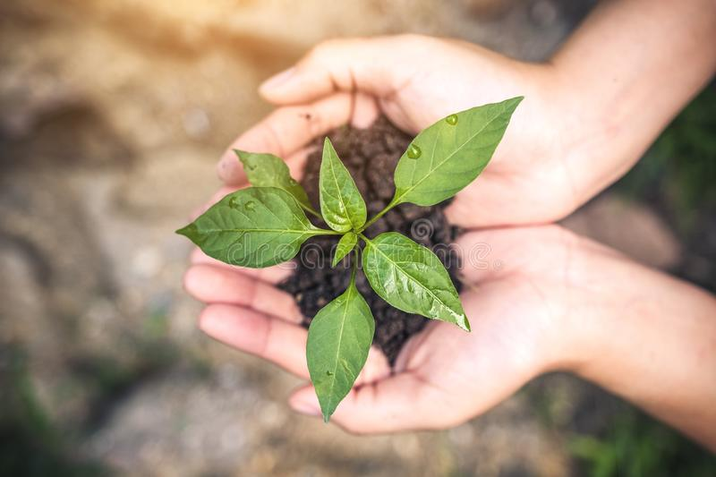 Top view image of hands holding soil and small tree to grow stock photography
