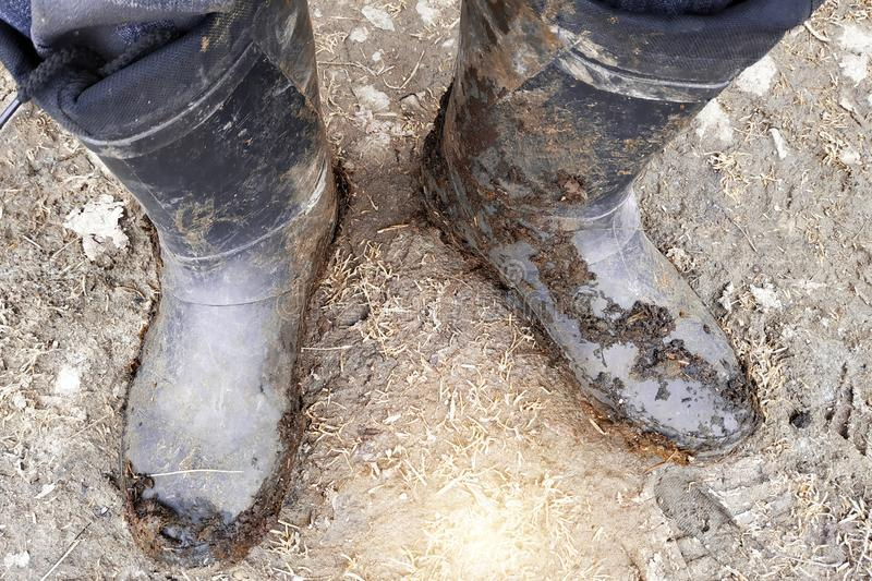 Top view of legs in black dark dirty rubber boots or wellingtons in mud and clay and manure stock image