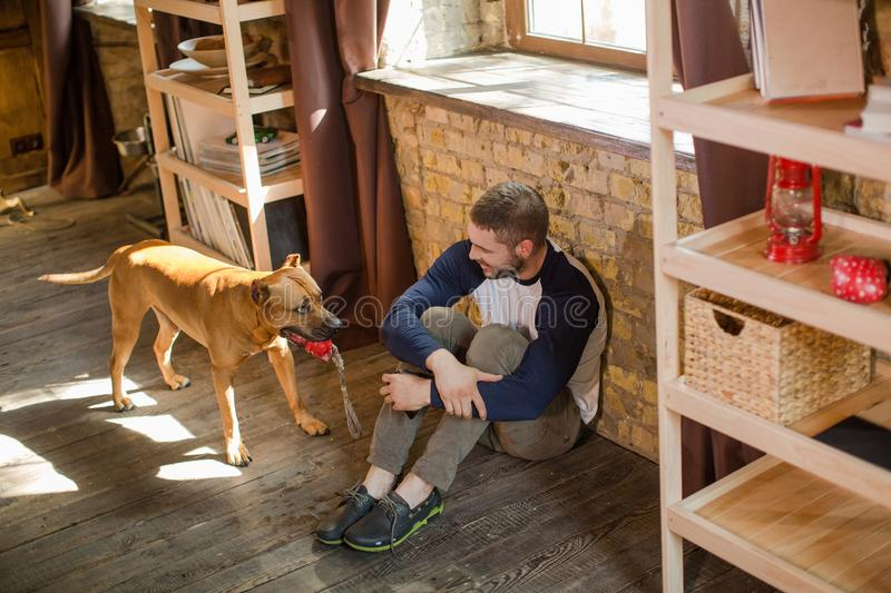 Top view of man sitting on floor, his dog holding toy in teeth. Sportive male playing with staffordshire terrier stock photos