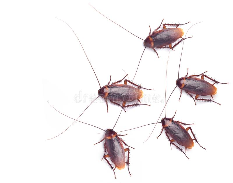 Top view of many Cockroaches stock photography