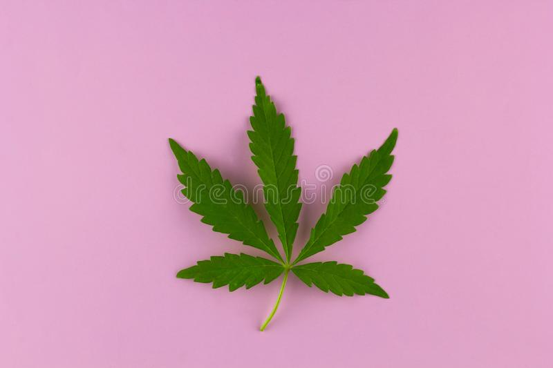 Top view marihuana leaf stock image