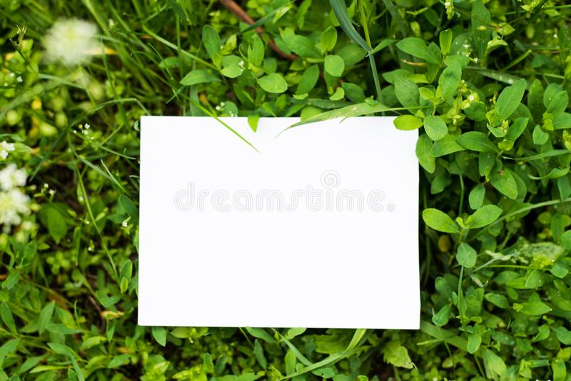 Top view mock up leaves with paper note/ place for text. Mock- green background with copy space stock image