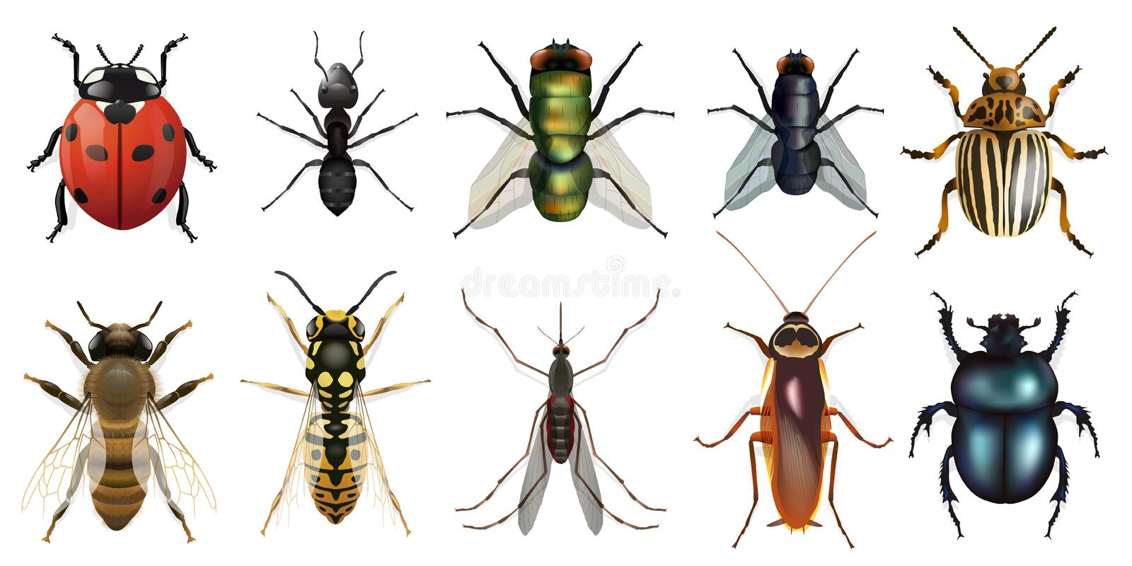 Naturalistic board presenting the ten main insects vector illustration