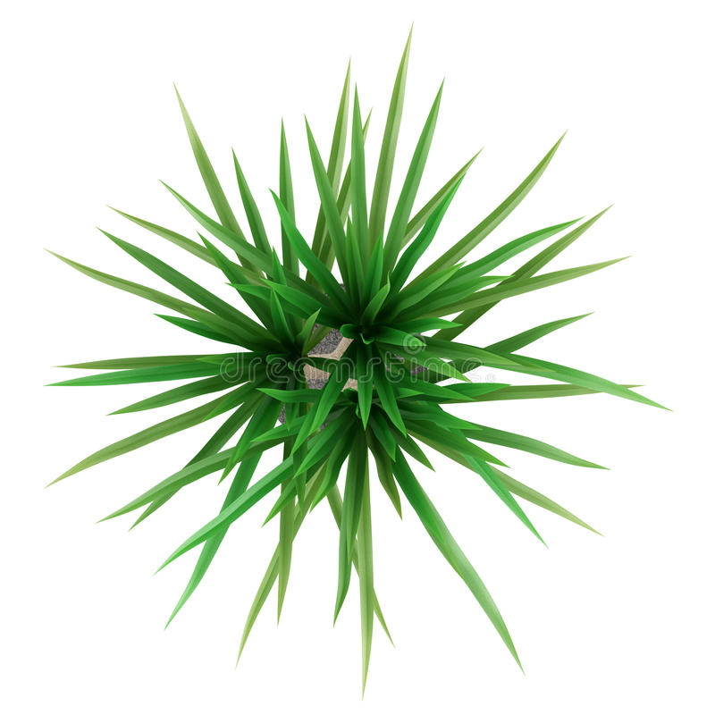 Free Top View Of Potted Palm Tree Isolated On White Stock Image - 46173261