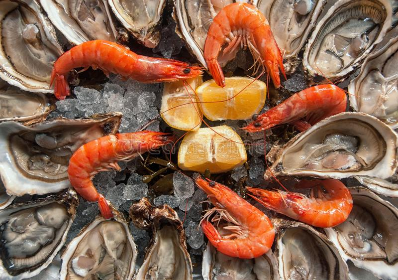 Top view oysters background with Open Oysters with shrimps and l royalty free stock photo