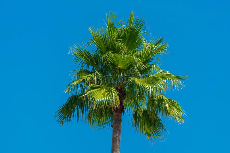 Top view of palm tree in gardens of JW Marriott hotel 1. Orlando, Florida. July 16, 2019. Top view of palm tree in gardens of JW Marriott hotel 1 stock photos