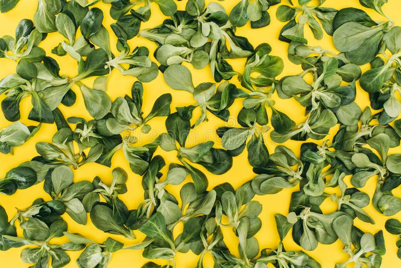 top view of pattern made from beautiful green corn salad leaves stock photos