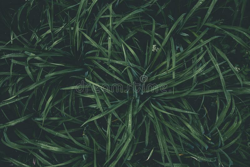 Top View Photography of Green Plant royalty free stock photo