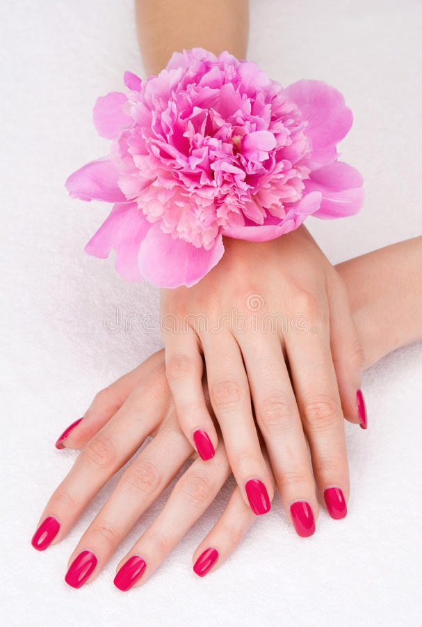 Top view pink manicure with flower royalty free stock photography