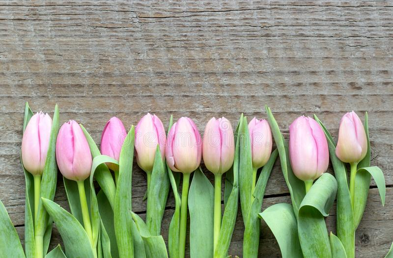 Top view of pink tulips royalty free stock images