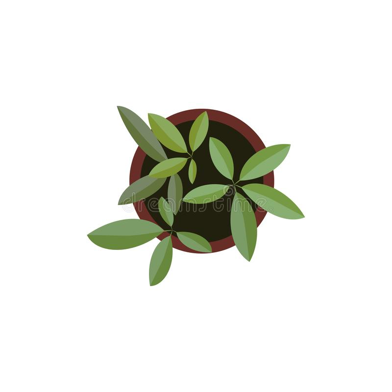 Top view. plants Easy copy paste in your landscape design projects or architecture plan. Isolated flowers on white. Top view. Big collection plants easy copy royalty free illustration