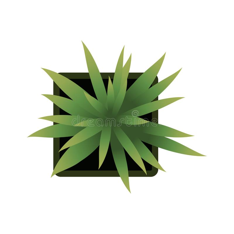 Top view. plants Easy copy paste in your landscape design projects or architecture plan. Isolated flowers on white. Top view. Big collection plants easy copy stock illustration