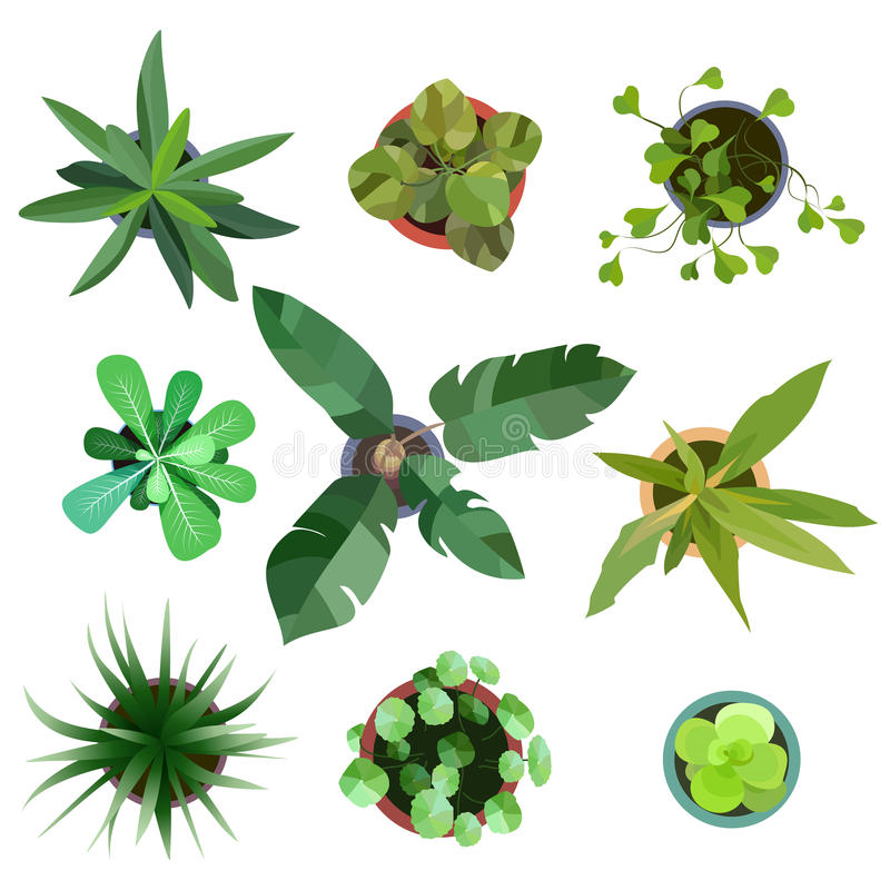 Top view. plants Easy copy paste in your landscape design projects or architecture plan. Isolated flowers on white. Top view. Big collection plants easy copy vector illustration