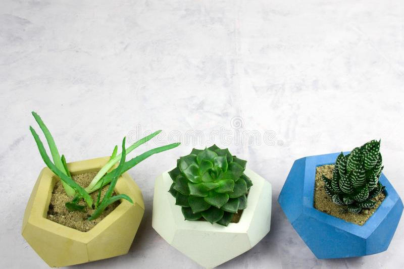 potted succulents on white snone background copy space stock image