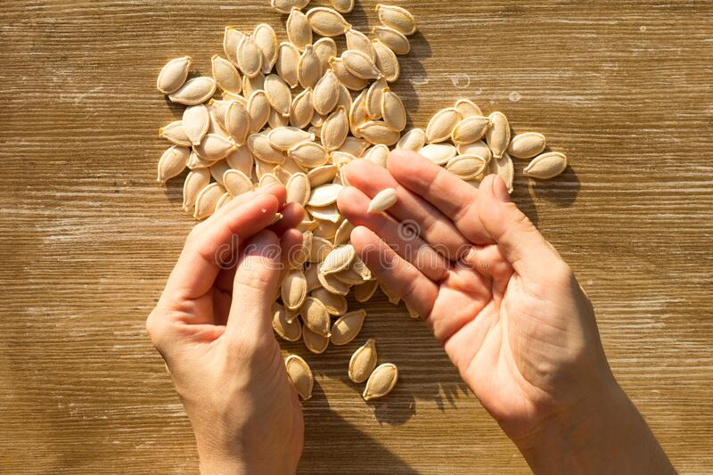 Top view of raw seeds pumpkin and one peeled off seed on woman hand on the wooden background. Top view of raw seeds pumpkin and one peeled off seed on woman hand royalty free stock images