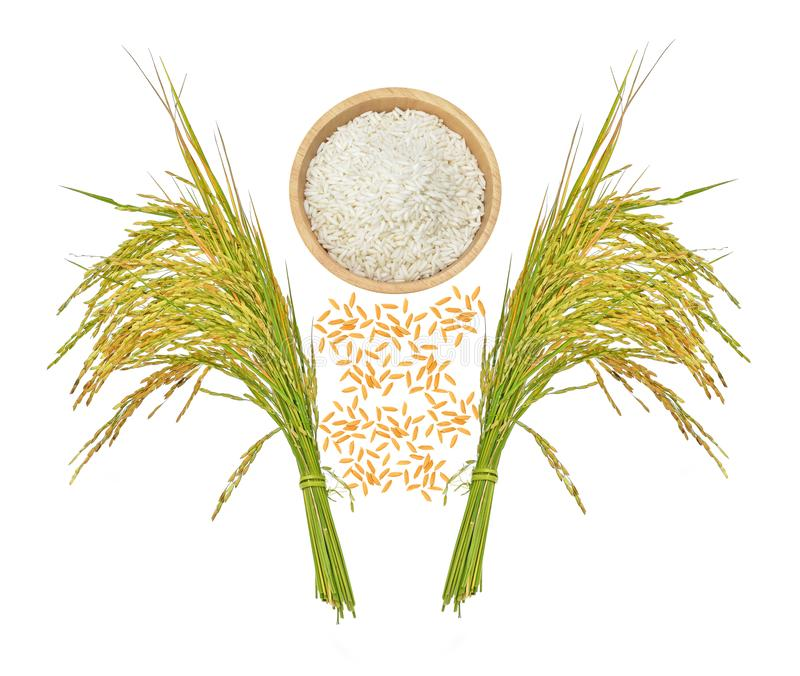 Top view of rice grains isolated on white background.  stock images