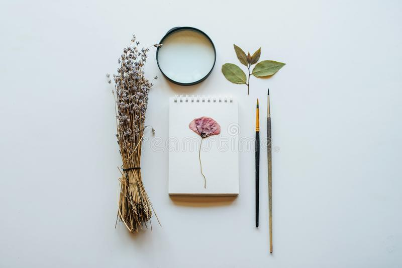 Top view shot composition of dried flowers. Lavender, pencil, notebook, leaves and magnify glass isolated on White Background with Real Shadow. Concept of stock images
