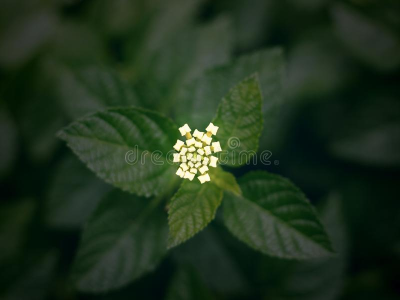 Top view of small flower royalty free stock images