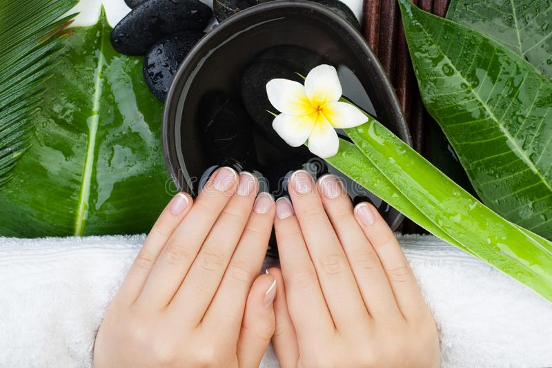 Top view of Spa manicure. Beautiful female hands stock photo