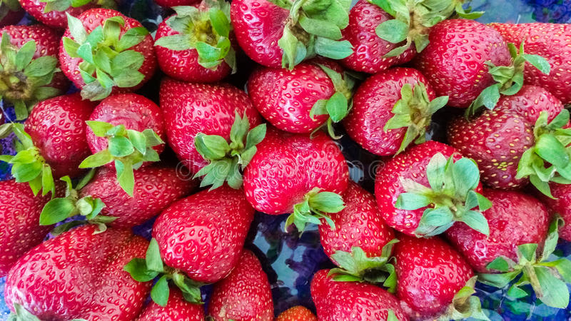 Top View of Strawberries. Top View of Fresh Strawberries royalty free stock photos