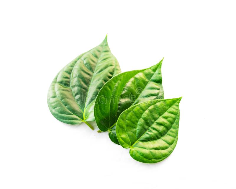 Top view studio shot three raw betel leaves or paan isolated on white royalty free stock photography