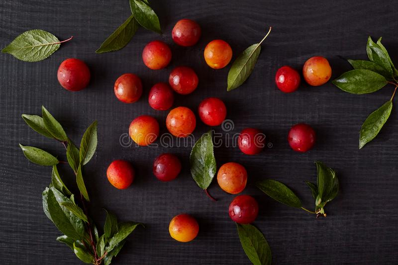 Top view of summer harvest of fruits on dark gray painted wood. Colorful composition with fresh organic and delicious plums and stock image