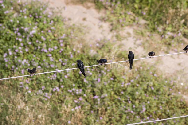 Top view of swallow birds. royalty free stock images
