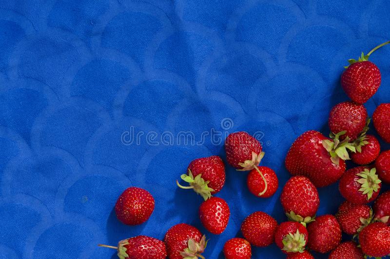 Top view of sweet and whole strawberries on blue cloth. Top view of sweet and whole strawberries on blue royalty free stock photo
