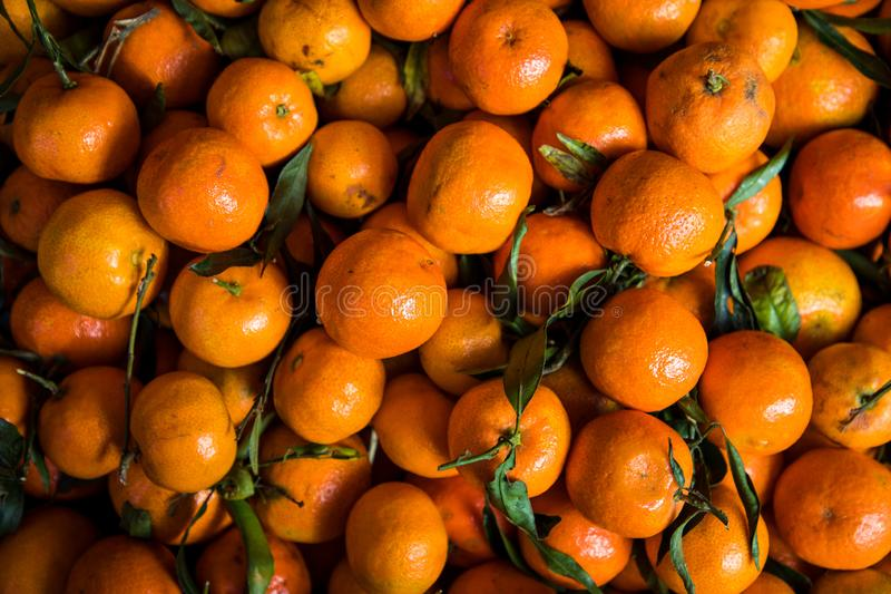 Top view of tangerines stock images