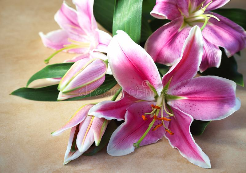 Tender bouquet of pink lilies lies on natural color board, Valentines Day background, wedding day, Happy Birthday. royalty free stock images