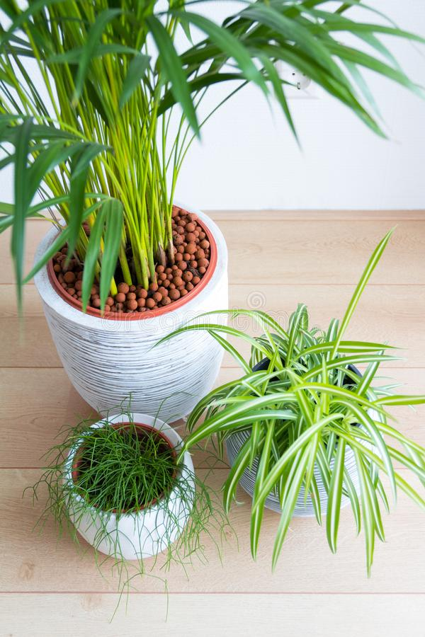 Top view of three houseplants in pots royalty free stock photos
