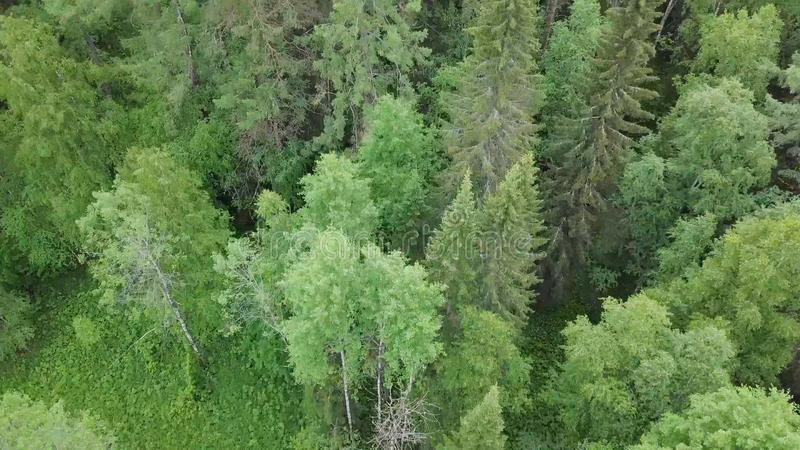 Top view of tops of green trees of dense forest. Stock footage. Beautiful nature with abundance of green in mixed forest stock image