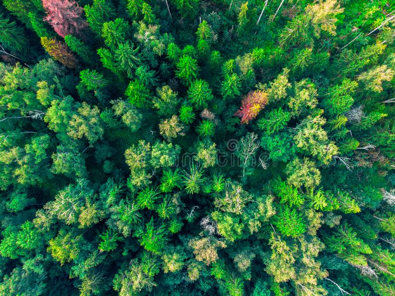 Top view on the tops of green trees. Russia stock photography