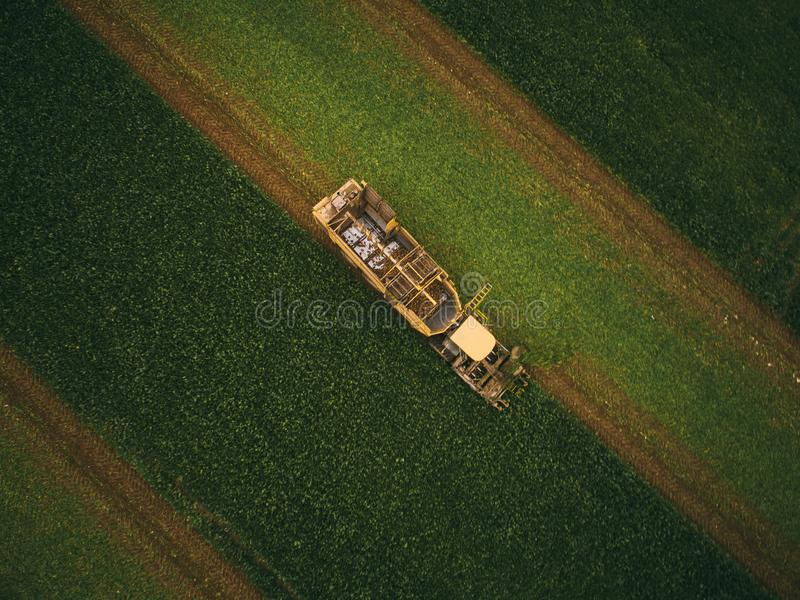 Top view of the tractor in the field of sugar beet. Aerial view.  stock images