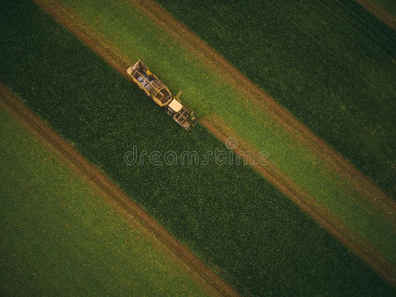 Top view of the tractor in the field of sugar beet. Aerial view.  royalty free stock photos