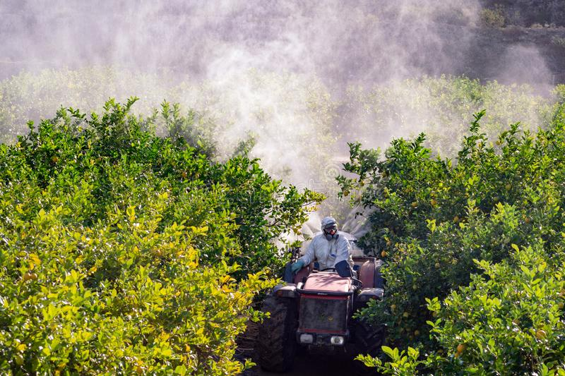 Top view of Tractor spraying pesticide and insecticide on lemon plantation in Spain. Weed insecticide fumigation. Organic. Ecological agriculture. A sprayer stock image