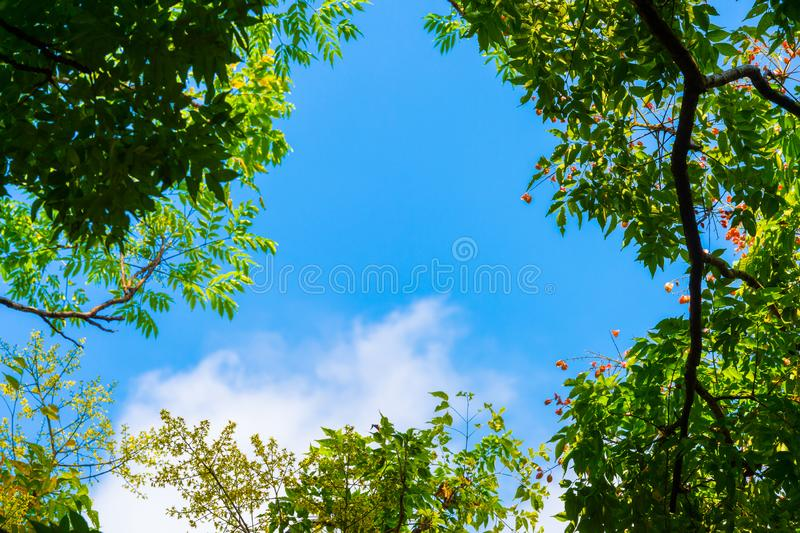 Top view with tree branch and blue sky stock photo