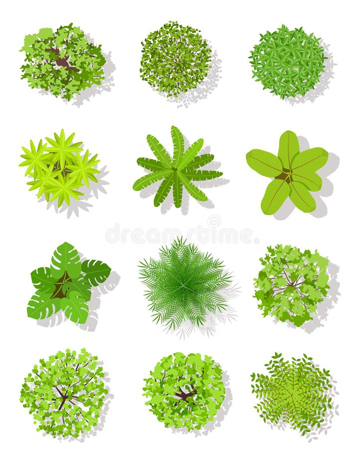 Top view tree. Landscape plan trees with leaves and bushes. Garden planting vector isolated design elements. Top view tree. Landscape plan trees with leaves and royalty free illustration