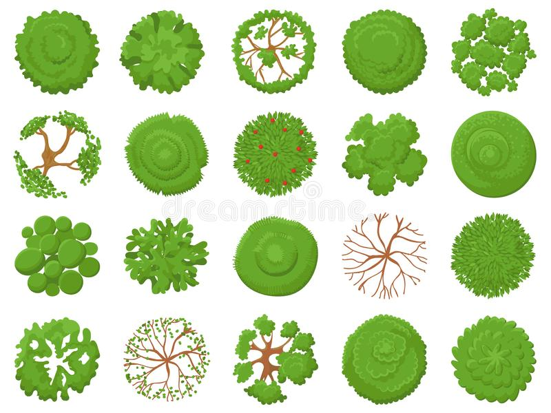 Top view tree. Planting green trees, park map vegetation and tropical forest maps viewing from above vector illustration. Top view tree. Planting green trees stock illustration