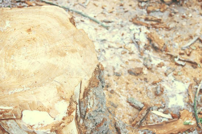 Top view of tree stump. stock images