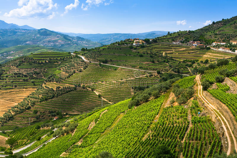 Top view of the vineyards are on a hills. royalty free stock images